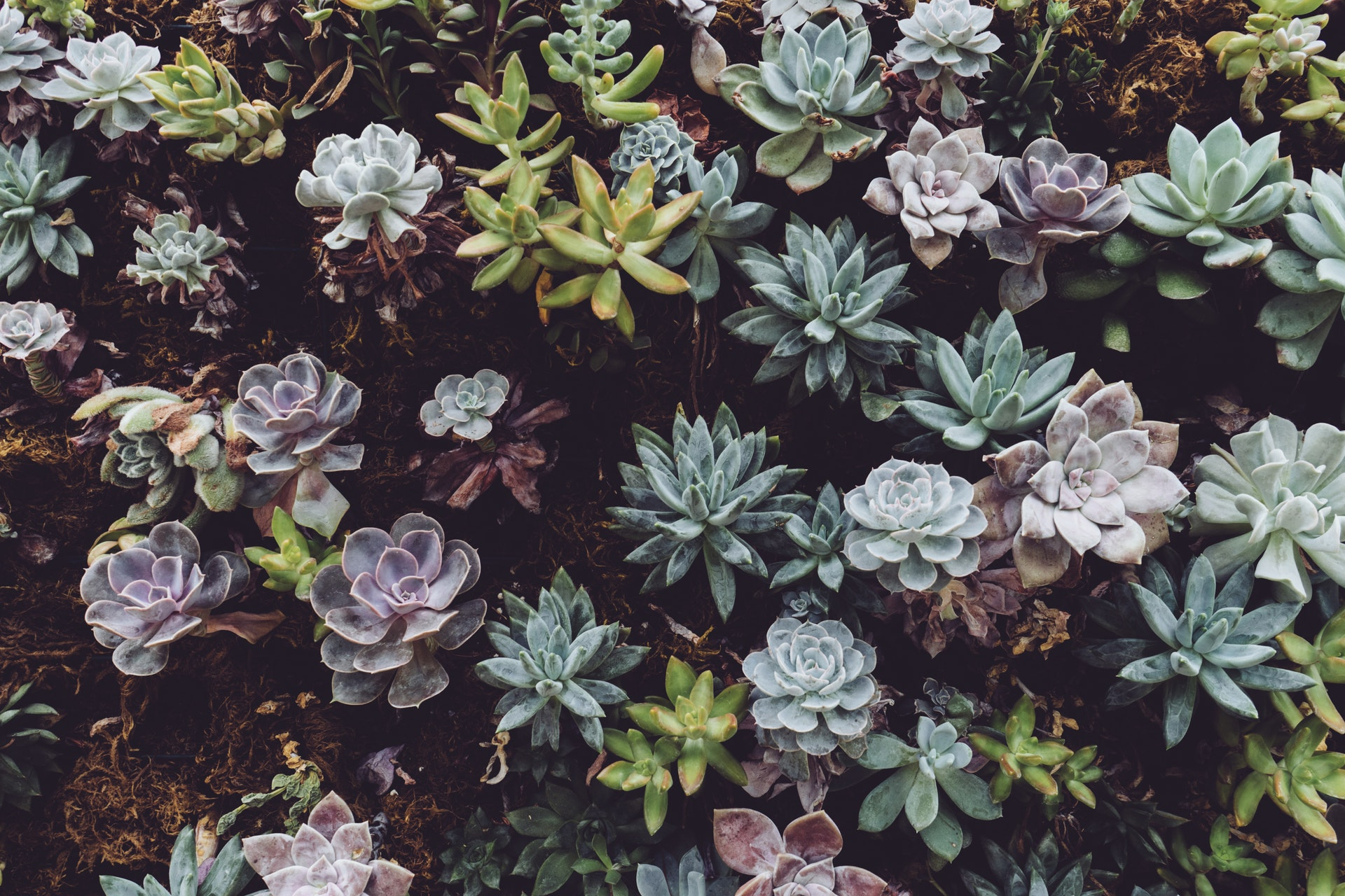 Batch of succulent plants in front yard of home